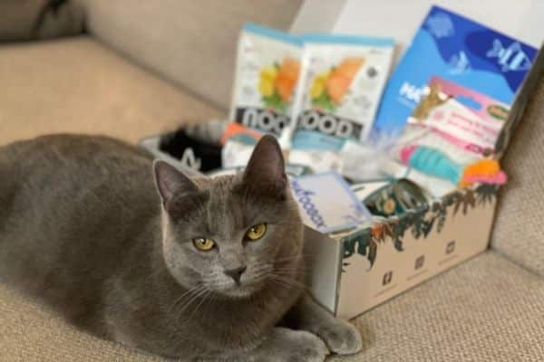 boxchat-poisson-d'avril-chat