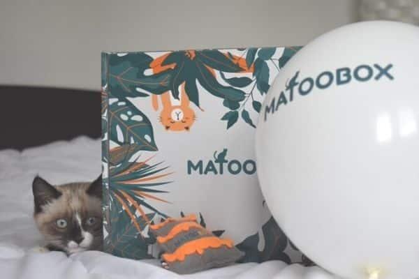 BOX-DÉCOUVERTE-CHATS-MATOOBOX