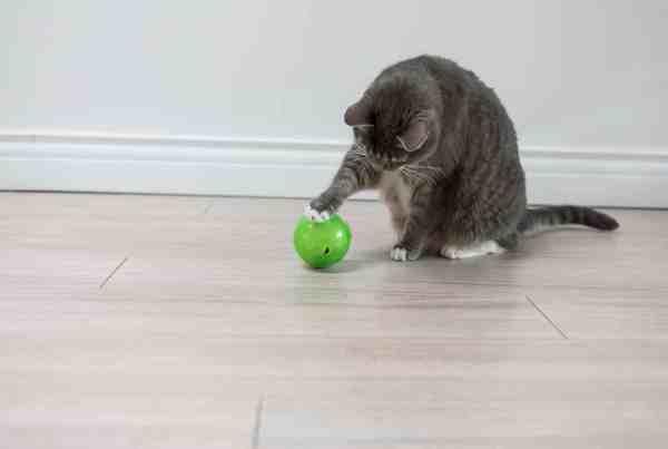chat-balle-jeu-jouets-matoobox