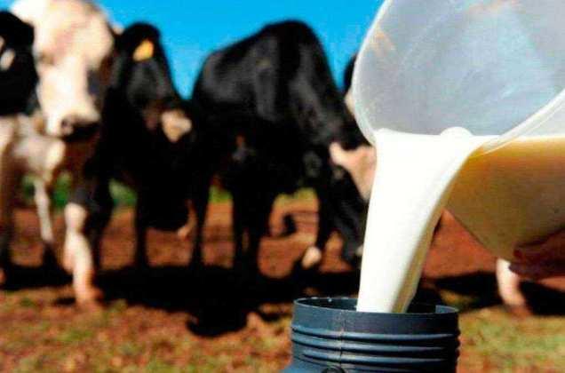 Resultado de imagem para Produção de leite na Bahia