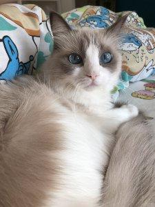 猫って、困ったとき控えめにヒトの視界に入りこんでくるよね