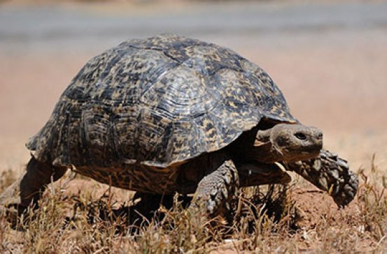 The Tortoise Investment Style