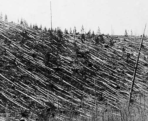 Tunguska 1908 Explosion Site