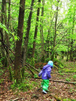 """Entdeckungstour und """"wilde"""" Tiere im Wald"""