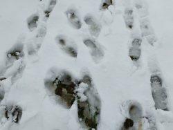 Wildling_Grip-auf-Schnee-Barfuß-Schuhe