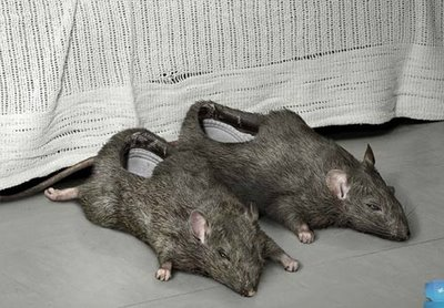 most-disturbing-shoe-the-rat-shoe