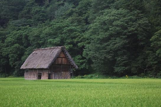 田んぼの中の家