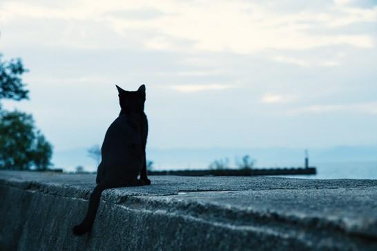 埠頭の黒猫