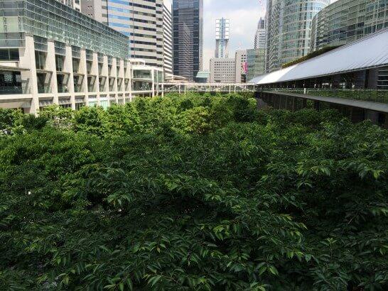 ヨンドシーの株主総会会場の周辺 (1)