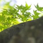 新緑と木漏れ日