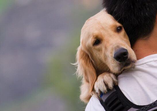 犬を抱える男性