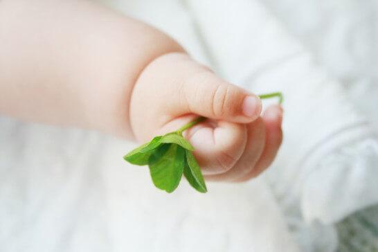 四葉のクローバーを握る赤ちゃん
