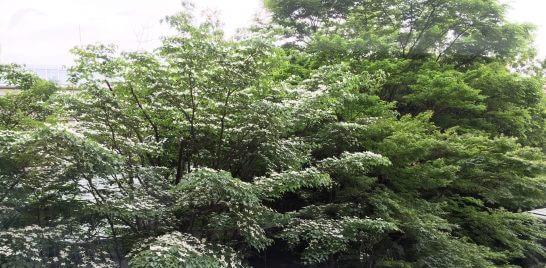 ロイヤルパークホテルの日本庭園