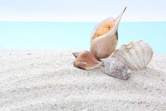 海岸と貝殻