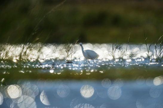 鳥 (6)