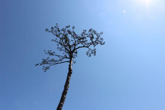 岩手県の陸前高田の奇跡の一本松