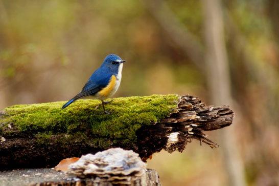 ソニーのカメラで撮った鳥