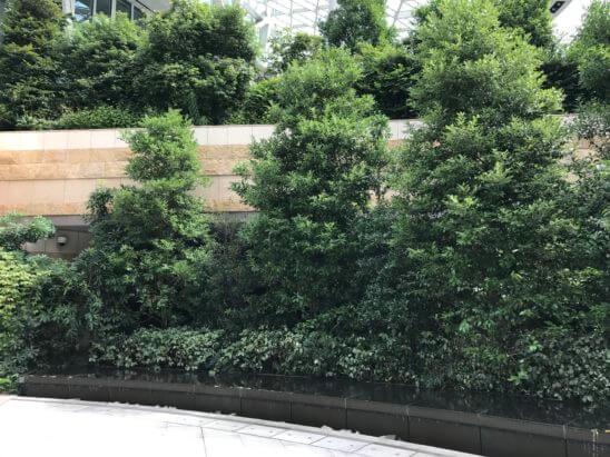 アンダーズ東京の入口の緑
