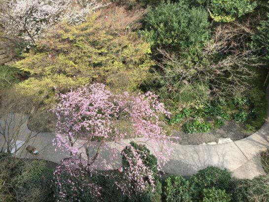 グランドプリンスホテル新高輪の窓からの景色