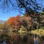 吉祥寺の井の頭公園の紅葉 (7)