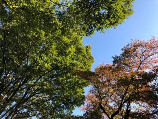 秋の快晴と緑