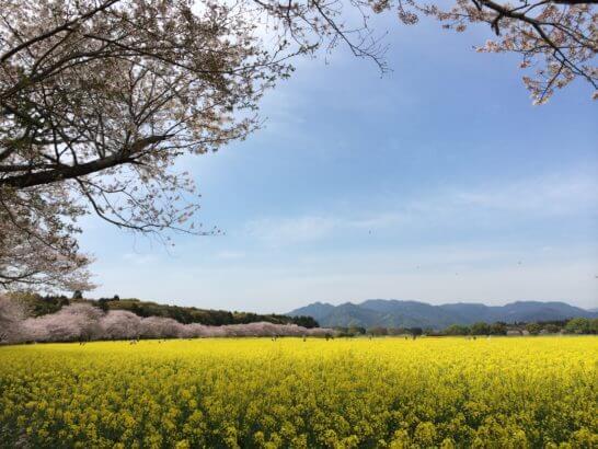 宮崎県西都市の西都原公園