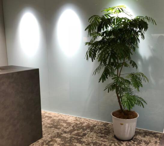 ジャックスのオフィスの観葉植物