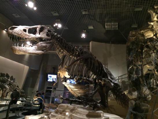 国立科学博物館のティラノサウルス