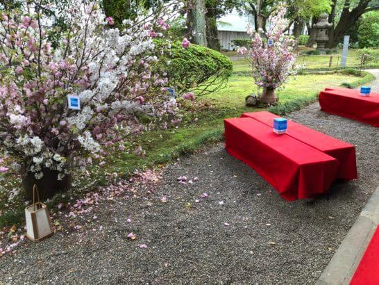応挙館のお花見茶席