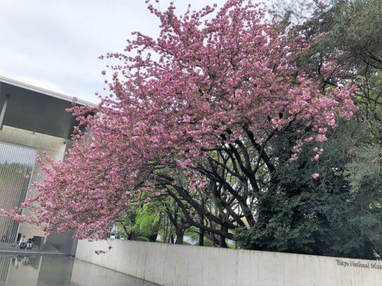 法隆寺宝物館の花