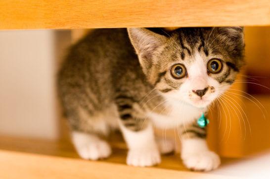 目をうるうるさせる猫