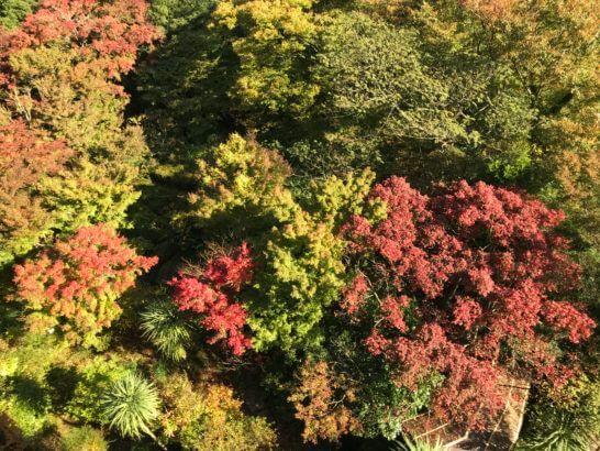 箱根吟遊からの紅葉の景色