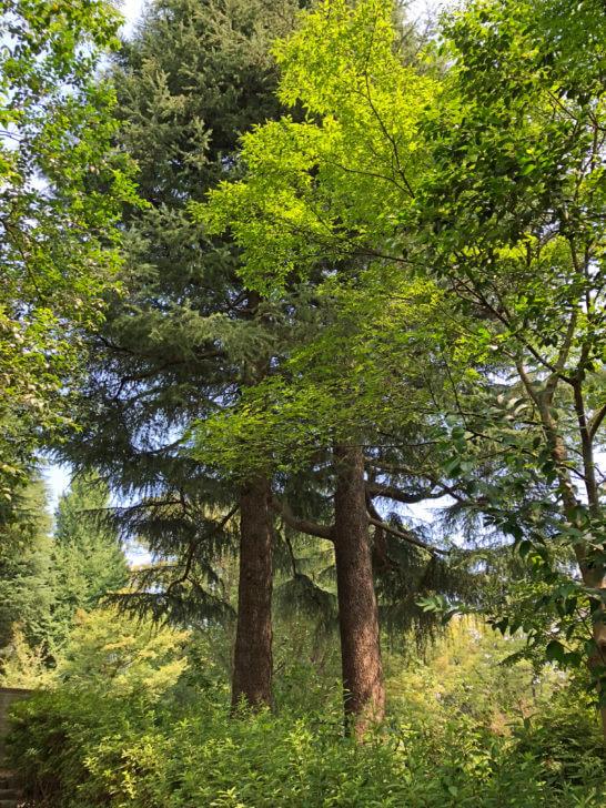 有栖川宮記念公園の木