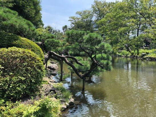 有栖川宮記念公園の松