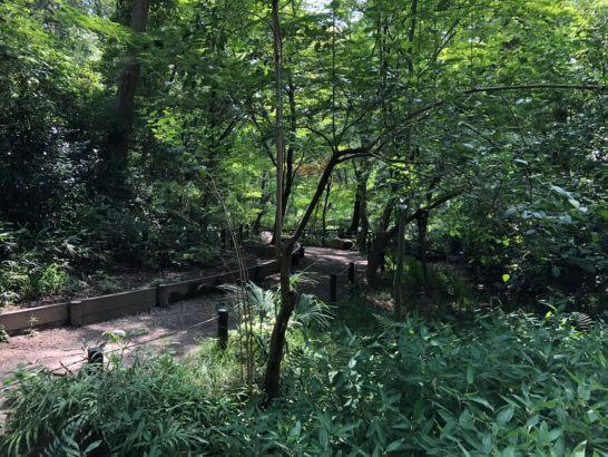有栖川宮記念公園の道 (2)