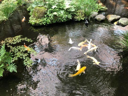 ロイヤルパークホテルのミニ庭園の池