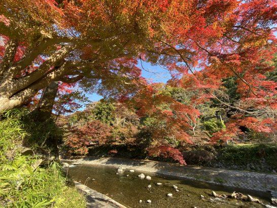 叡山電鉄の八瀬比叡山口駅周辺の川・紅葉