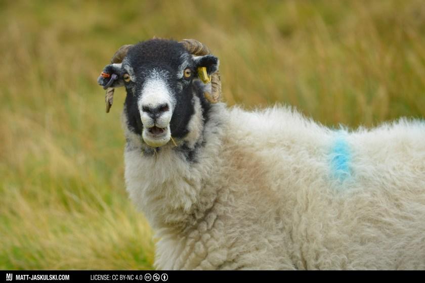 70200mm animal goat hiking landscape nationalpark naturebritain Nikon peakdistrict travel uk