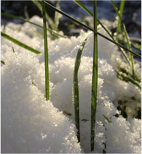 spring-grass