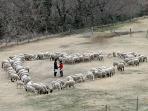 羊のハート