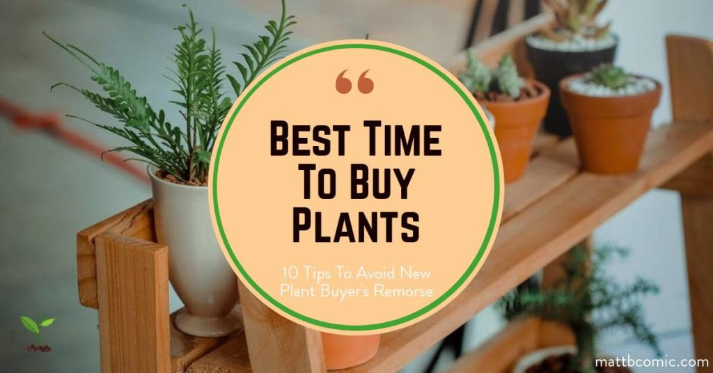 Best Time To Buy New Plants