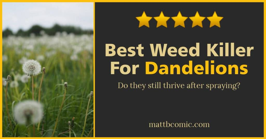 Best Dandellion Killer For Lawns - Wide Blog Post Graphic
