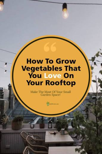 Rooftop Container Vegetable Gardening Post Graphic