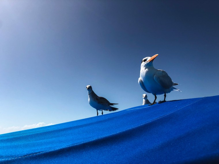 Three sea birds standing atop a boat, captured in hero pose.