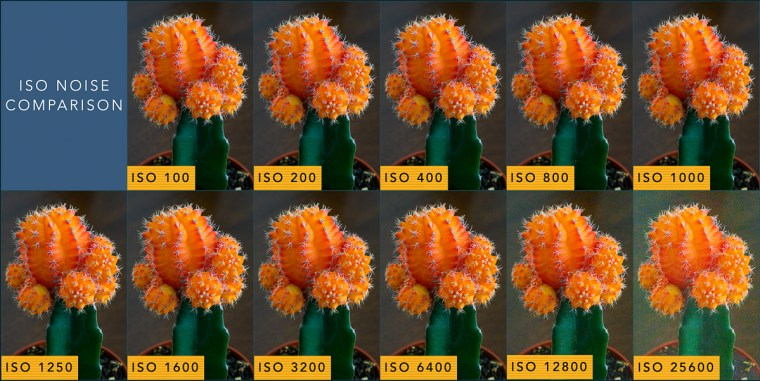 Series of 11 images of an orange cactus , each taken at a different ISO setting. This demonstrates the difference in sensor noise.