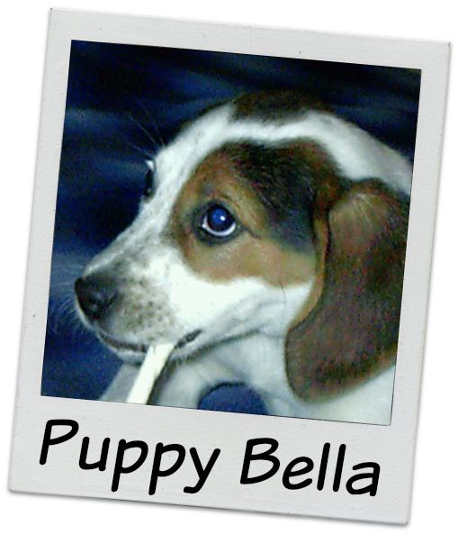 Puppy Bella