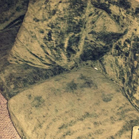 There is the bone hiding in the couch #BrightMind #ad