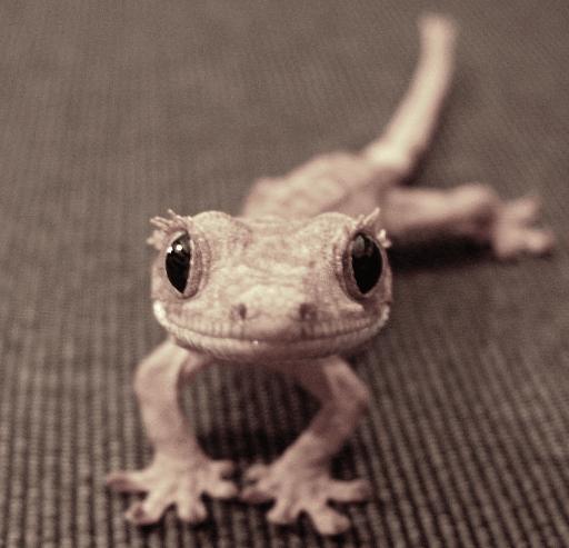 Reptile Head