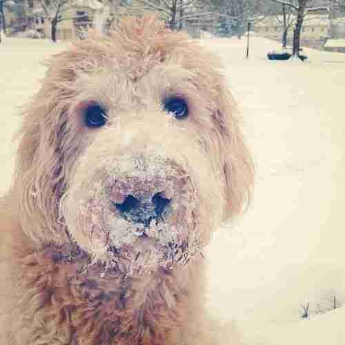 Paddy in Snow