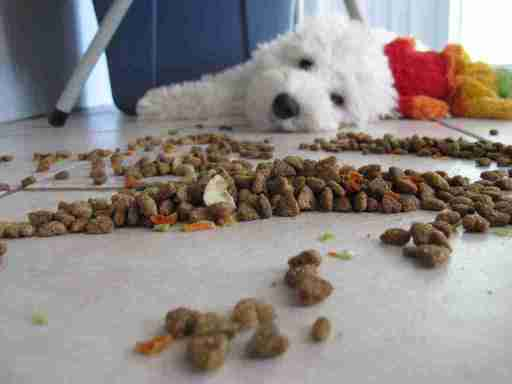 Picture of a dog staring at a floor of spilled dog food.